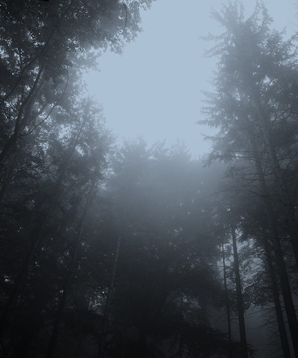 Forest in a mist